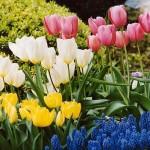 春の花【ガーデニング】育てやすい花!