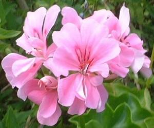 春の花ガーデニングの簡単な花