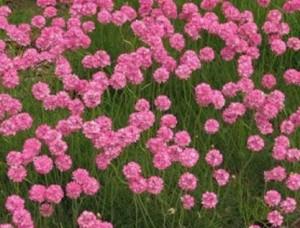 春の花ガーデニング育てやすい花