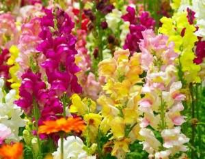 春の花ガーデニングの育てやすい花
