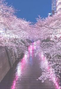 皆既月食に夜桜のコラボ天気は