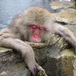 長野県【サル】が温泉に浸かる!外国人に好評