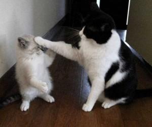 ネコしっぽふりふり