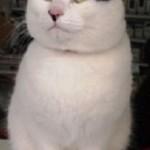 【ドキュメント72時間】三戸の福ネコ!ハチの眉?