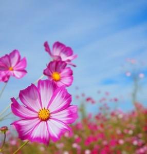 アトピー性皮膚炎慢性化原因と治療法