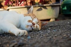 【4.7.8】呼吸法!眠りを誘う事ができる実践方法は?