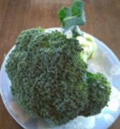 【葉物野菜】ブロッコリー!育て方は?