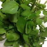 【クレソン】が様々な『がん』を予防する最強の野菜!