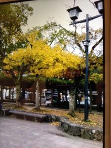 【紅葉】宮島の『紅葉谷公園』!紅葉情報と服装?