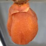【干し柿】栄養と効能がスゴイ!干し柿の作り方