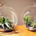 【エアプランツ】簡単に育てることができる植物!?