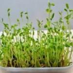 【栽培キット】野菜が簡単に作れる!