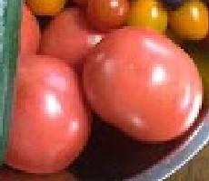 大玉【トマト】植え付け時期・育て方!